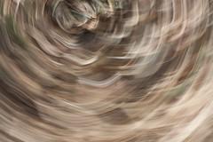 Grove Swirl 13 (drainuzzo) Tags: autumn light art fall colors leaves foglie grove magic swirl autunno colori luce bosco brushstroke vortici pennellata magicalgrove
