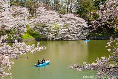 Sakura in Stock / Tokyo, Japan (yameme) Tags: travel flowers nature japan canon eos tokyo  sakura cherryblossoms     chidorigafuchi   24105mmlis 5dmarkii 5d2