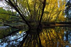 IMG_0448 (berserker170) Tags: arbol otoño puertopeña puerto peña river rio hoja leaf eos 7d canon fall autumn tree extremadura flickrexploreme