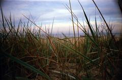 Dune (Mifipifi) Tags: beach strand 35mm iso200 lomo lomography dune norden balticsea iso gras ostsee mv mecklenburgvorpommern lomografie meckpomm lasardina