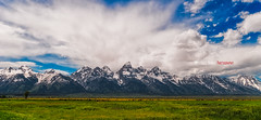 Buffalo under the Tetons (Michael Bandy) Tags: mountains clouds nationalpark buffalo wyoming grandtetons tetons bison herd crazyclouds grandtetonnationalpark grandtetonsnationalpark