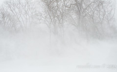 Lakeshore Blizzard (rellet17) Tags: winter ohio snow cold nature marblehead wind blizzard whiteout