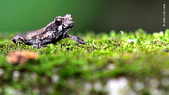 Ecology class (jluizmail) Tags: people nature animal jump pessoas foto gente natureza frog toad fotografia sapos hopper animalplanet pequeno rã ecologia tinytoad saltador tinyfrog anfíbios macrocritters minitoad anuro minúsculo anuros jluiz minisapo jluizmail joãoluizlima sapopequeno criaturamacro microsapo minirã rãpequena cienciasbio