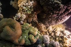DSC00741 (Martin Flemig) Tags: underwater redsea egypt diving scubadiving tauchen underwaterphotography unterwasser rotesmeer unterwasserfotografie lahamibay todropbox todropboxpixunderwater