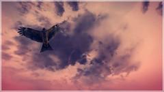 Flying High (~Scimo~) Tags: fantasy screenshot skyrim sky clouds bird vogel flügel wings pink fliegen flying
