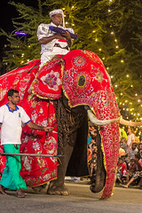 "Elephant - Nawam Perahera <a style=""margin-left:10px; font-size:0.8em;"" href=""http://www.flickr.com/photos/40608624@N00/15816403403/"" target=""_blank"">@flickr</a>"