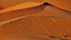 Dunes in apricot and cinnamon (flowerikka) Tags: desert cinnamon dunes apricot liwa abudabi emtyquarter