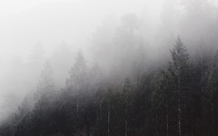 I've Been Meaning To Say... (John Westrock) Tags: fog foggy trees nature outdoors pacificnorthwest canoneos5dmarkiii canonef100400mmf4556lisusm johnwestrock pwlandscape washington