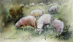Ovejas (P.Barahona) Tags: pluma acuarela ovejas pbarahona