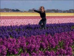 Flower Princess (Ostseeleuchte) Tags: netherlands spring hyacinth frhling niederlande keukenhof hyacinthus hiacynt frhlingsblumen flowerfield 2015 blumenfeld magnoliopsida hyazinthen flowerprincess ostseeleuchte blumenprinzessin hyasintslekta