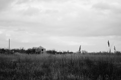 Texas Chainsaw Massacre (Frostroomhead) Tags: bw plants white house black building reed nature field landscape