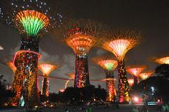 Singapore - Gardens by the Bay - Supertree Grove 4 (Docaron) Tags: show tree garden singapore jardin explore singapour arbre sonetlumière gardensbythebay supertreegrove dominiquecaron