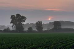 Sonnenaufgang im Frühnebel (webpinsel) Tags: dülmen frühling landschaft morgensonne morgenstimmung münsterland natur nebel sonnenaufgang morgens