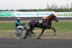 IMG_2730 (lovelymelancholy) Tags: horses horse hevoset hevonen horseraces ravit imrautio ravihevonen oulunravirata