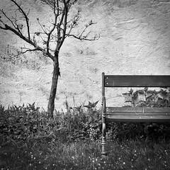 Please take a seat (Tomsch) Tags: blackandwhite bw tree grass wall garden bench austria blackwhite sterreich wand bank sw gras schwarzweiss garten baum niedersterreich hofgarten loweraustria seitenstetten stiftsgarten