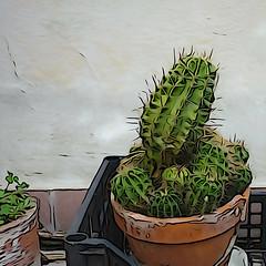 Urban green: Echinopsis (illustration mode) (sandroraffini) Tags: green sonyrx100 urban illustration effect terraces echinopsis cactus plant bologna