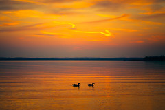 Twogether (Bokehschtig (OFF to Berlin/Beelitz)) Tags: sunset sundown ducks two pair love colors colours clouds dof bokeh depthoffield chiemsee bavariansea chieming shadow silhouettes water lake pond aftersunset bluehour reflections sony a7 sonya7 fegm8514 85mm f14