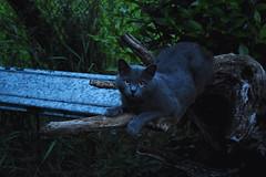 Cloe (Marta Marcato) Tags: cold nature cat outside natura gatto freddo fuori posa nikond7200