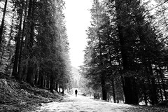 All'inizio si vede il cielo (Nicola Carraro) Tags: snow ice forest alone walk 5 sony nex