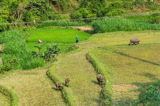 bac son - vietnam 12