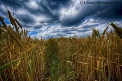 Giugno bizzarro (EXPLORE) (Gianni Armano) Tags: photo san italia nuvole foto valle piemonte giugno pioggia gianni paesaggio bizzarro vento alessandria grano bartolomeo armano