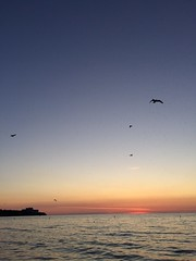 Detroit - Shoreway Cleveland Oh. #amazing #evening #beachwalking #sunsets #greatcompany #lakeerie #Edgewater. Seagulls going after bugs.... (kelsey_erinbook13) Tags: evening amazing lakeerie sunsets edgewater beachwalking greatcompany