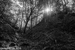 The Bluffs - Watertrail (l3n2k1) Tags: park trees sky blackandwhite plants lake toronto ontario canada water monochrome clouds forest landscape rocks outdoor trail scarborough bluff bluffers watertrail distagont2128