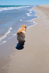 go ahead (xgrager) Tags: catalonia summer beach deltadelebre pet kibou dog platjadelamarquesa fujifilmx esfujifilmx jefa