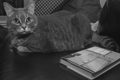 Day Thirty-Six (MBPruitt) Tags: portrait pet white black writing cat photography book king stephen on