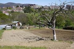 030516 074 (Jusotil_1943) Tags: 030516 sin hojas arboles sinhojas tierra arada chabola oviedo
