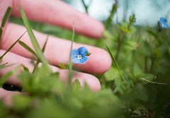 Little flower are you sad? (Jerainne) Tags: flowers blue plant flower green grass canon spring hand bokeh finger fingers wiese gras 24mm grn blau blume frhling 70d