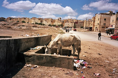 love is gone (michel nguie) Tags: michelnguie film analog street urban fes fs fez marocco africa horse road sky buildings people projects clouds car