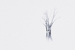 White Out (Beetwo77) Tags: blue bw lake west tree rural 35mm landscape fuji nsw lone minimalist mudgee toning windamere xt1 photpgraher
