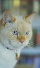 Snowy cat (judith511) Tags: cat snowy