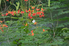 A lakeside picture (sanat_das) Tags: flowers leaves butterfly kolkata 28300mm d800 surveypark