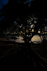 Dusky Tree (GRO Photography) Tags: leaves blue beach silhouette sunset bench water trunk tree branches orange dusk