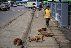 Who let the dogs out? (Bn) Tags: myanmar birma burma yangon rangoon former capitol street candid monk bikes taxi city six million people buddhist temple botataung pagoda botahtaung buddha hair old religions locals 40m high road car gold kyats umbrella sunshine fietstaxi gate entree destroyed rebuild colonial overwhelmed infrastructure slums pilgrims buddism traffic cycling botatuang stupa millenium hotel transportation harbor haven township skynet satellite television pay tv aerials grunge alley backstreet dogs sleep dog pavement straydogs stray zwerfhonden 50faves topf50