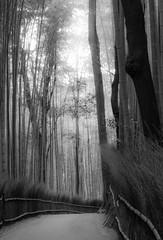 Bamboo-3260346 (jessylein1) Tags: blackandwhite bw japan lights licht kyoto mood olympus bamboo sw schwarzweiss bnw stimmung bambooforest omdem5