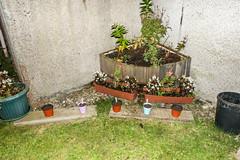 flo 11 (pamelaadam) Tags: thebiggestgroup fotolog digital autumn october 2015 work youthwork ellonparishchurch churchofscotland ellon aberdeenshire scotland