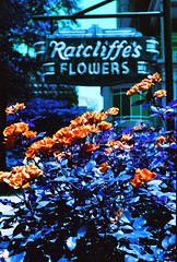 Ratcliffe's (hpaton1) Tags: film analog purple charlotte canonef2470mmf28l canoneos1v lomochrome