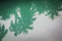 (Un par de peras) Tags: textura reflejo palmera lovenature palm cuba baracoa baracoacuba water agua verde green lluvia rainyday