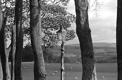 Yorkshire Street Lamp (amanthei) Tags: leica uk trees england sky blackandwhite bw film lamp clouds analog rural outside countryside sheep unitedkingdom britain streetlamp yorkshire country grain hills lantern yorkshiredales leicaflex wensleydale northernengland analogfilm leicaflexsl simonstonehall