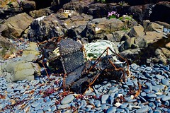 Washed Up (rustyruth1959) Tags: flowers beach outdoors coast scotland nikon rocks isleofskye outdoor pebbles rope pots shore nikkor nikond3200 ardtreck fishinggear