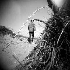 (Sean Anderson Media) Tags: blackandwhite beach mediumformat holga spring sand walk dune grain roots hike lakemichigan flare cubs vignette holga120n plasticlens illinoisbeachstatepark
