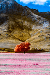 IMG_2921s (francois f swanepoel) Tags: boomalleen ceres foliage infrared infrarooi lonesometree weskaap westerncape wolseley