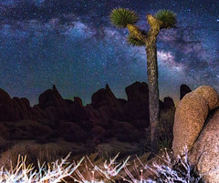Joshua Tree in front of the Milky Way Panorama (muhammad_elarbi) Tags: life park nightphotography blue light red sky panorama usa brown color tree green nature colors beautiful beauty grass night canon stars landscape fun outside photography nationalpark rocks colorful nightimages natural joshua outdoor live space wide joshuatree like wideangle hobby astro national astrophotography astronomy nightsky 28 ef core galactic lightroom milkyway 1635 eflens canonusa teamcanon canon70d wideangke