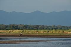 Zambia_  20162016-05-0216-08-07 (C_Baltrusch) Tags: christian safari afrika zambia sambesi selfdrive sambia zambeziriver baltrusch
