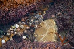 20100102_Corona_del_Mar_0002.jpg (Ryan and Shannon Gutenkunst) Tags: ocean ca usa shells water coronadelmar coronadelmarstatebeach