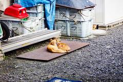 Today's Cat@2016-07-02 (masatsu) Tags: cat pentax catspotting mx1 thebiggestgroupwithonlycats