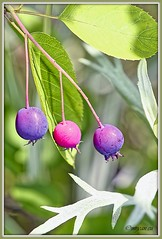 _JVA7674_DxO (mrjean.eu) Tags: park pink blue white france flower macro fleur rose yellow fleurs jaune garden rouge nikon jardin vert bleu botanic lorraine botanique parc metz 105mmf28 flowerws grteen
